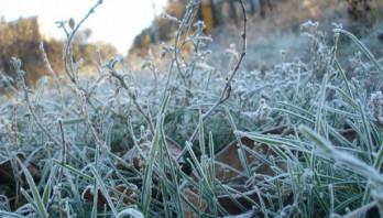 Заморозки на Яворівщині