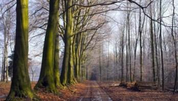 Небезпека на дорогах в золотисту осінь