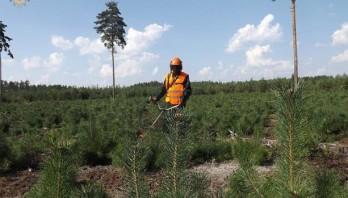 В області вибірково оглянули лісокультурні об'єкти на площі 359 га