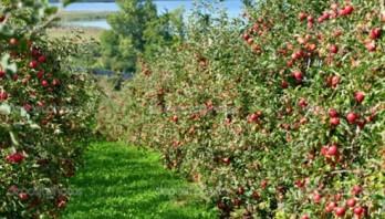 Держпідтримка-2019: Сільгоспвиробникам буде компенсовано майже 120 млн грн за придбаний садивний матеріал