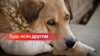 17 серпня – Всесвітній день безпритульних тварин