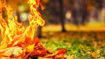 Не спалюй сухої трави!