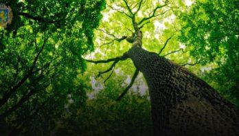 На Львівщині триває лісовідновлення