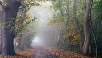 18 жовтня вночі та вранці місцями туман видимістю 200 – 500 м