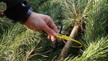 """""""Новорічна ялинка"""": рейдові групи патрулюють лісові угіддя"""
