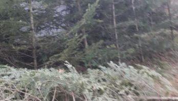 Лісопорушники розпочали незаконне добування зимових красунь