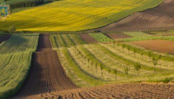 22 січня відбудеться земельний аукціон з продажу прав оренди на земельні ділянки державної форми власності