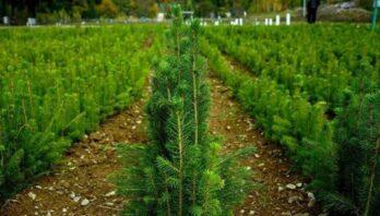 На Львівщині планують здійснити лісовідновлення на площі близько 2000 га