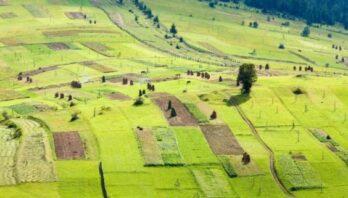 26 березня відбудеться земельний аукціон з продажу прав оренди на земельні ділянки державної форми власності