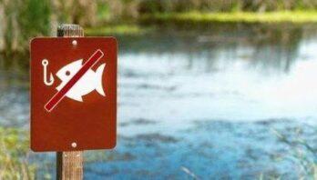З квітня по червень на Львівщині – період охорони нерестуючої риби