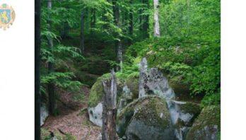 У лісогосподарських підприємствам області обстежують ліси