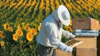 Фермери та пасічники області отримають підтримку з державного бюджету