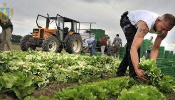 Для розвитку фермерських господарств Львівщини виділили 4,6 млн грн фінансової підтримки