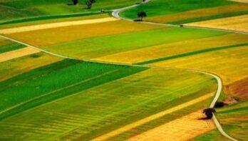 У власність громад передали землі сільськогосподарського призначення
