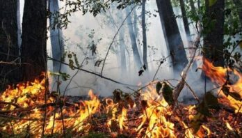 До уваги мешканців: на Львівщині висока пожежна небезпека
