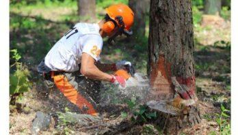 На Львівщині відбулись змагання вальників лісу