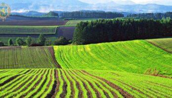 До уваги аграріїв: 23 липня відбудеться земельний аукціон з продажу прав оренди ділянок землі