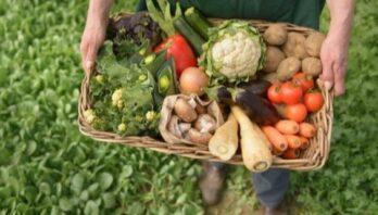 Стартувала нова програма «Органічна торгівля заради розвитку у Східній Європі» (OT4D)