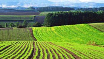 До уваги аграріїв: 2 серпня відбудеться земельний аукціон з продажу прав оренди 16 земельних ділянок