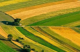 Важлива інформація про переважне право орендаря на купівлю земельної ділянки сільськогосподарського призначення
