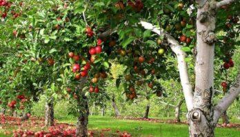 Понад 100 млн за 5 років: виробники Львівщини отримують фінансову підтримку на розвиток плодово-ягідного бізнесу
