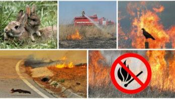 Закликаємо громадян відмовитись від спалювання сухої трави