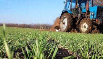 Поради аграріям: як не спричинити поганий врожай чи призвести до загибелі посівів взимку