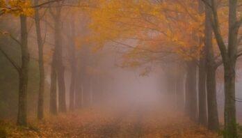 26 жовтня вночі та вранці місцями туман